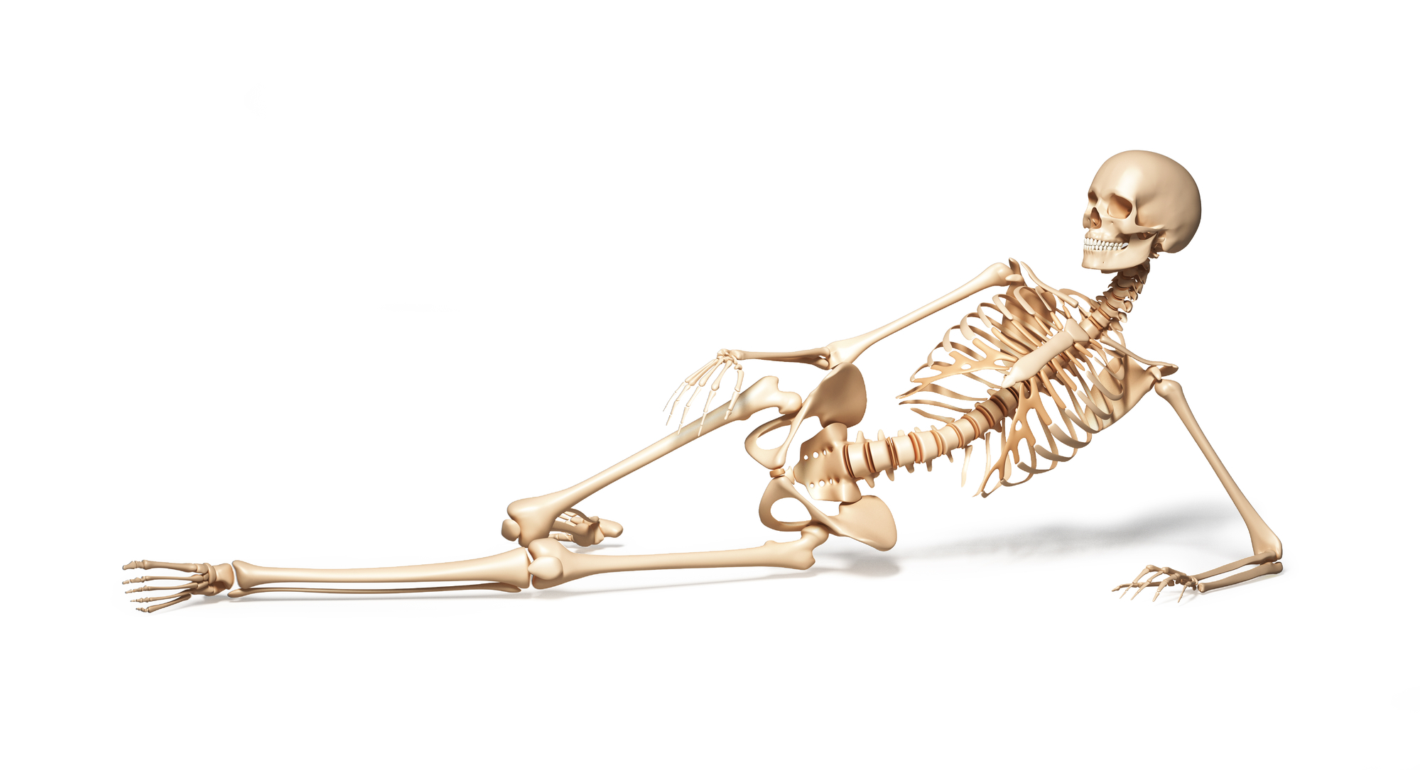 Illustration of female skeleton reclining