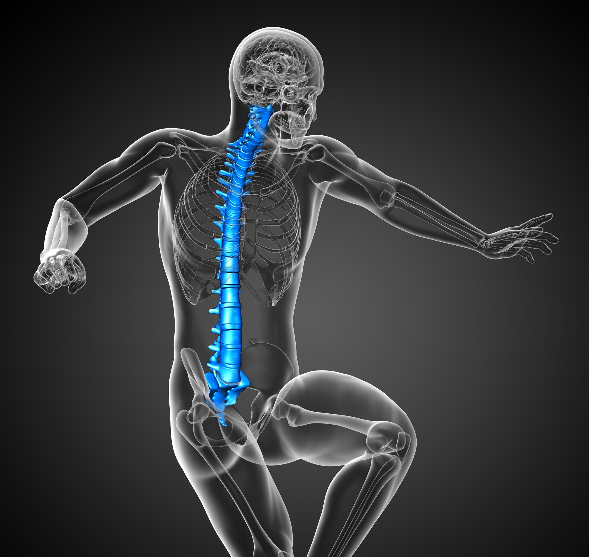 3d render medical illustration of the human spine - side view